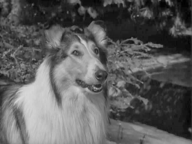 Η άγνωστη ιστορία που ενέπνευσε τη «Λάσι»-Τί απέγινε το σκυλάκι της σειράς! (photos+video)