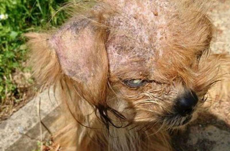 Δες την απίστευτη μεταμόρφωση ενός σκύλου: από ετοιμοθάνατος αναγεννήθηκε μέσα σε λίγους μήνες