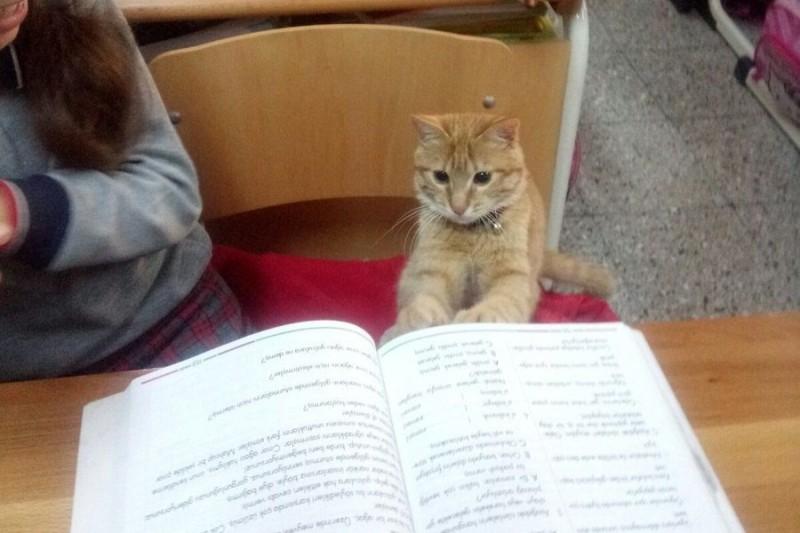 3b53b95bc344 Μια τάξη δημοτικού υιοθέτησε ένα... γάτο και πλέον κάνει μάθημα μαζί τους!