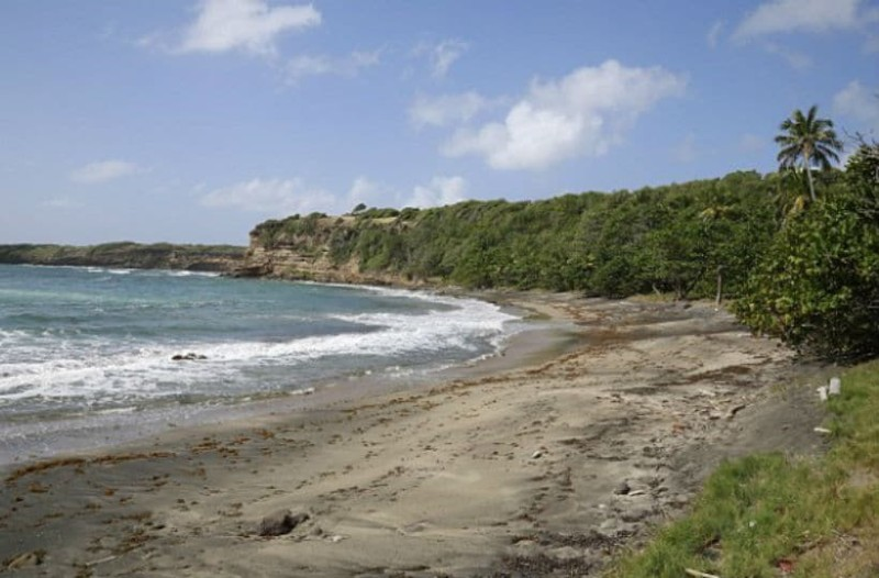 Σοκ: «Γίγαντας» την άρπαξε από την παραλία μέσα από τα χέρια του άνδρα της και την βίασε μέχρι θανάτου στη ζούγκλα (video)