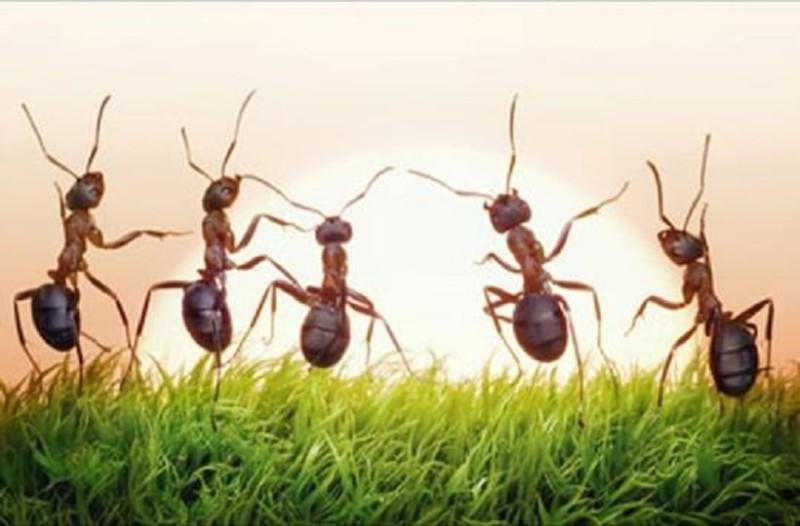 Mυρμήγκια στην κουζίνα; Φυσικοί τρόποι για να τα διώξεις μακριά!