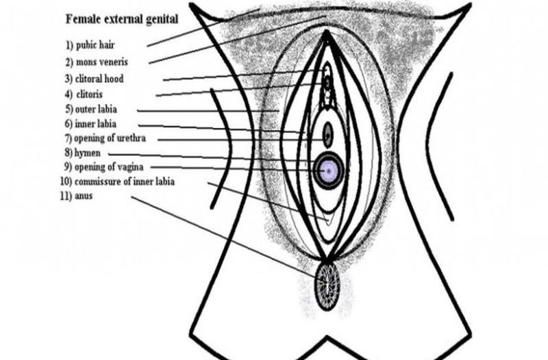 Δάχτυλα στον πρωκτό και το αιδοίο ταυτόχρονα: Τι παθαίνει η γυναίκα (+18)