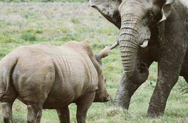 Ούτε ελέφαντας, ούτε ρινόκερος: Δείτε το μεγαλύτερο ζώο του μέλλοντος!