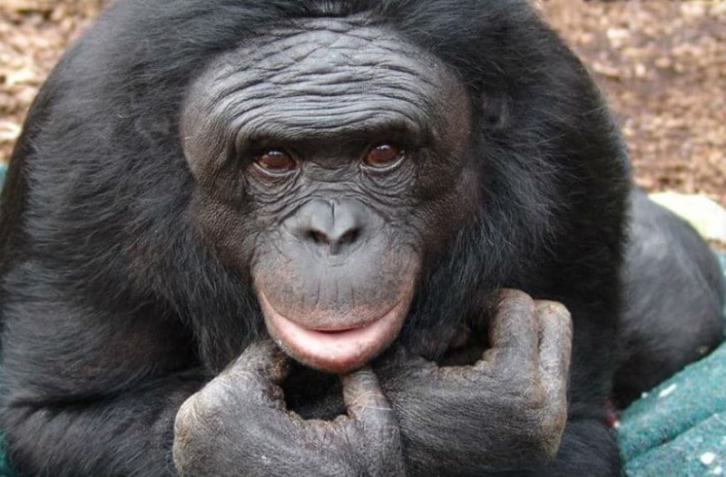 Τραγωδία: Πίθηκος άρπαξε βρέφος από την κούνια του - Το μωράκι ...
