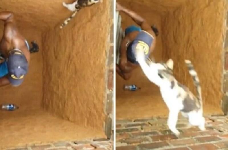 c16a780f89a2 H γάτα - νίντζα που έγινε viral! - Θα πάθετε πλάκα μόλις δείτε τι έκανε
