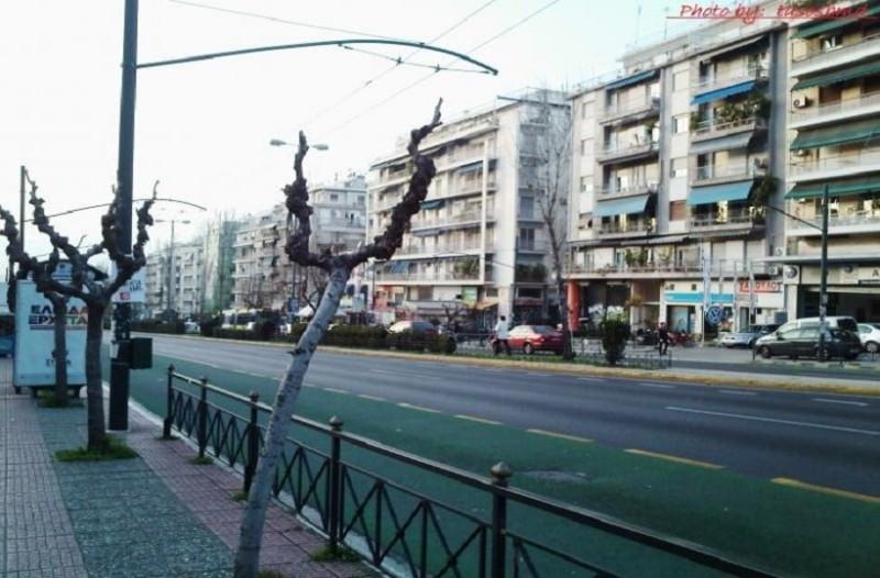 Κλειστή η Λεωφόρος Αλεξάνδρας από πτώση δέντρου!