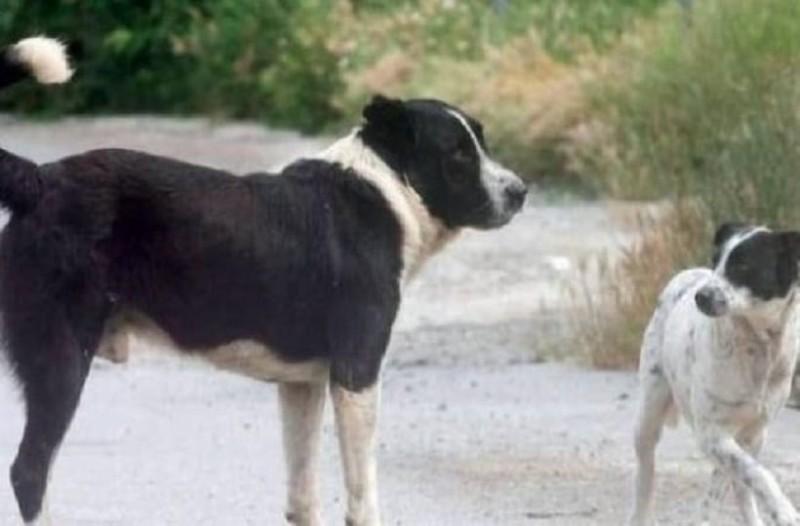 Χαμός στην Ερέτρια: Σκύλος δάγκωσε 11χρονο που ήταν σε μηχανάκι με τη μητέρα του!