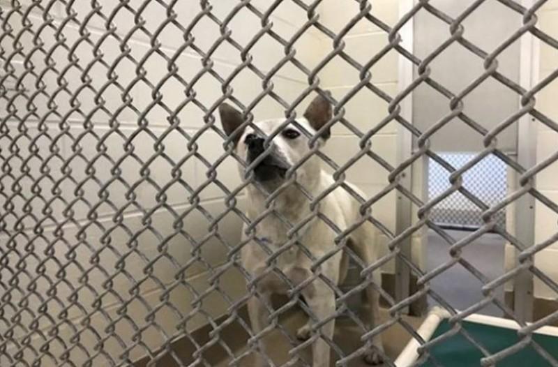 Φρίκη: Βίαζαν τον σκύλο τους και μαγνητοσκοπούσαν την κακοποίηση!