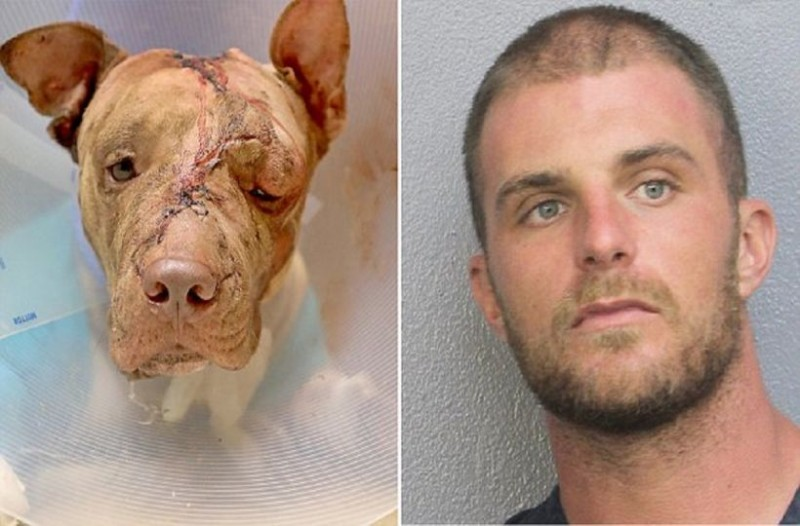 Μαχαίρωσε τον σκύλο του 50 φορές για να του κάνει βουντού! Αυτό που συνέβη στη συνέχεια, σοκάρει και τους πιο σκληρούς!