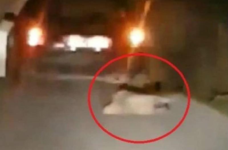 Φρίκη στην Βόνιτσα: Ηλικιωμένος έσερνε τον σκύλο του με το αυτοκίνητο!