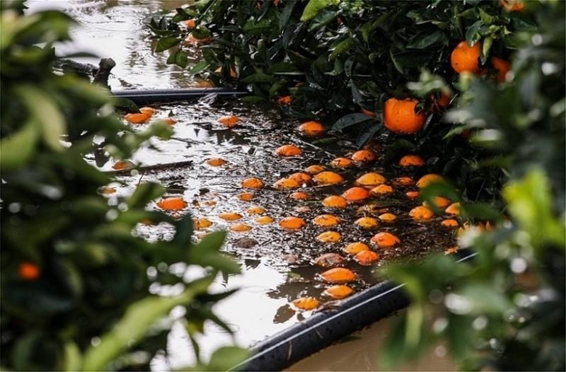 Πλημμύρισε ο ποταμός Αλφειός, καταστράφηκαν καλλιέργειες!