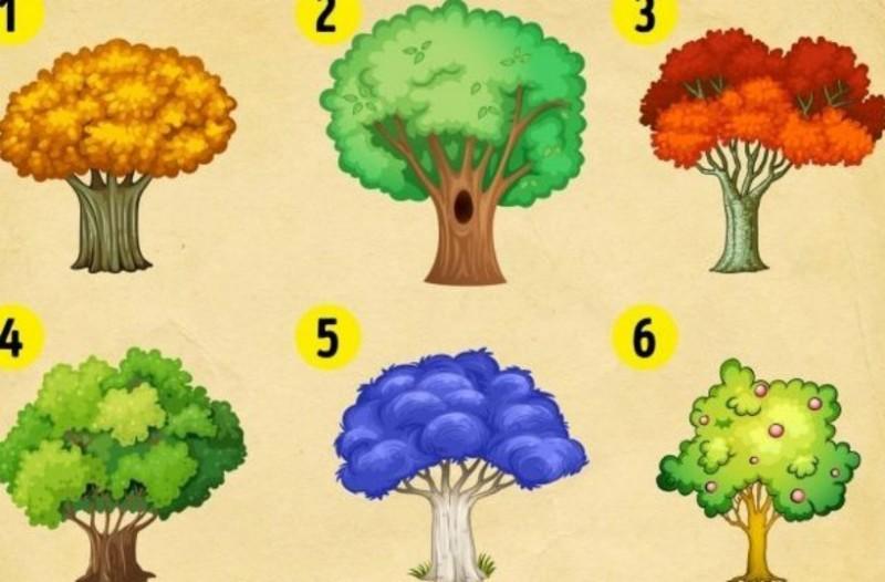 Διαλέξτε ένα δέντρο και ανακαλύψτε τι σας περιμένει το νέο έτος!