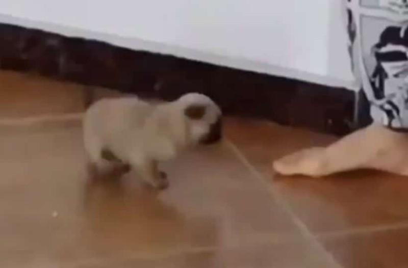 «Έλιωσε» το Twitter με το κουταβάκι που χορεύει! (video)