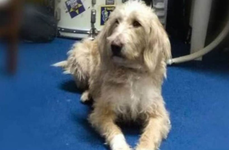 Κτηνωδία στην Αρκαδία: Σκότωσαν με φόλα τον σκύλο - σύμβολο του Αστέρα Τρίπολης!