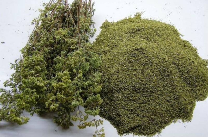 Ρίγανη: Το ταπεινό φυτό που θεραπεύει σχεδόν τα πάντα!