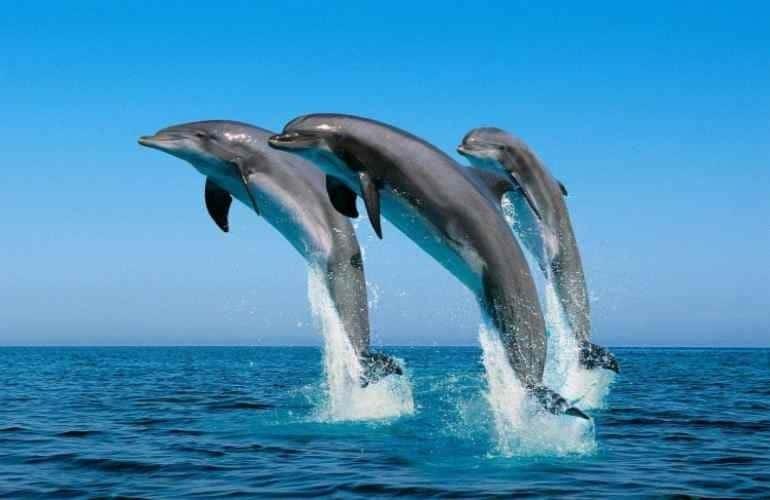 Τη νόσο του Αλτσχάιμερ είχαν τα δελφίνια που είχαν εξοκείλει σε ακτές της Φλόριντα!