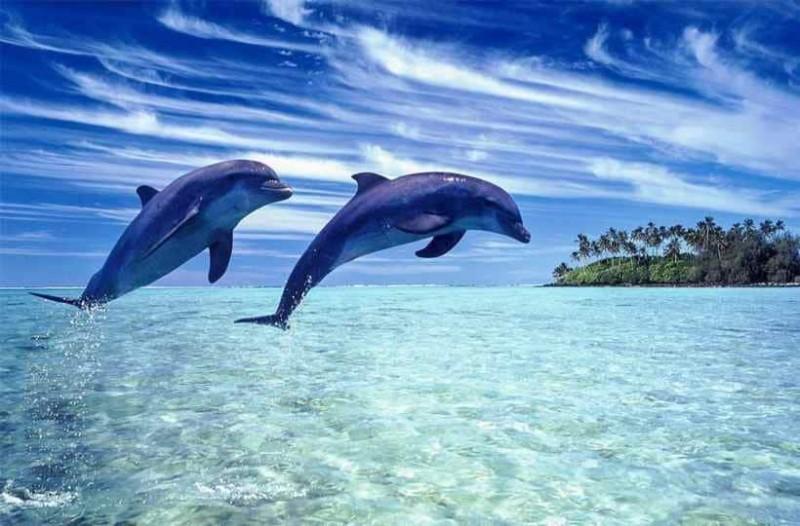 Τα δερφίνια που είχαν εξοκείλει στη Φλόριντα έπασχαν απο την νόσο του Αλτσχάιμερ!