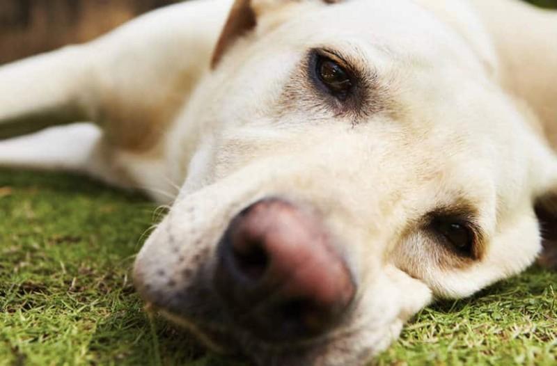 Δώστε προσοχή: Έτσι θα σώσετε ένα ζώο που έφαγε