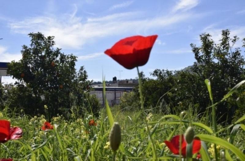 Κυριακή του Πάσχα: Hλιόλουστος ο καιρός - Με υψηλές θερμοκρασίες το σούβλιμα του αρνιού!