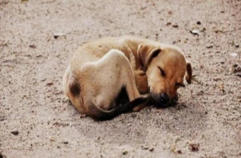 766ea5358e28 Γκρίκις  Τα αδέσποτα ζώα της Ελλάδας έχουν ελπίδες να βρουν σπίτι στην  Ευρώπη!