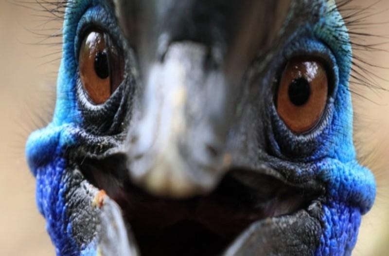 Μακρύ πουλί σεξ