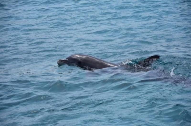 Kρήτη: H θάλασσα «ξέβρασε» νεκρό δελφίνι!