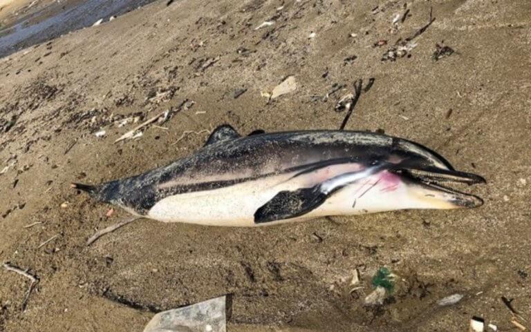 Σοκ στο Πήλιο: Η εικόνα στην παραλία πάγωσε τους πάντες! (photo)