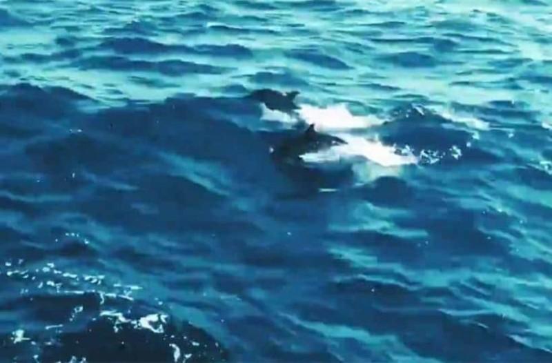 Αιγαίο: Τα νεκρά δελφίνια και η απάντηση των Τούρκων!