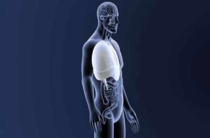 Γερμανία: Διαφανή ανθρώπινα όργανα δημιούργησαν οι επιστήμονες!