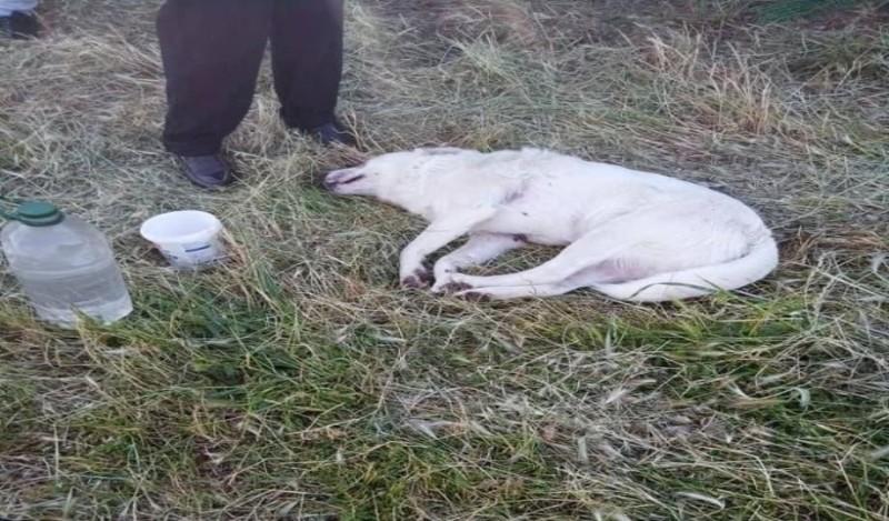 Φρίκη στο Αγρίνιο: Σκότωσαν σκύλο με ψαροντούφεκο