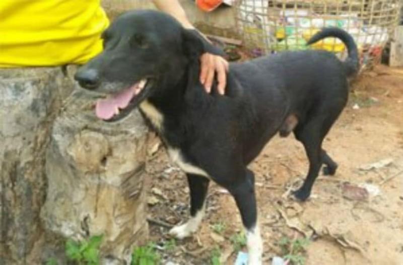 Τρομερό: Σκύλος έσωσε παιδί που το έθαψαν ζωντανό σε χωράφι!