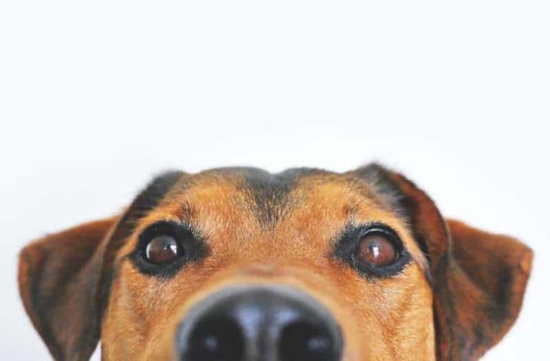 Ο σκύλος και η πεθερά...το ανέκδοτο της ημέρας (31/5/19)!