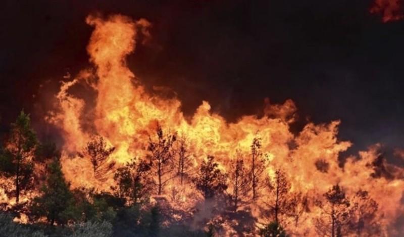 WWF: Ανέτοιμη η Ελλάδα για νέες πυρκαγιές!