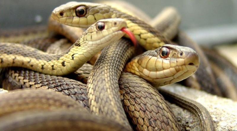 Ανεξήγητο: Μια ολόκληρη πόλη γέμισε φίδια.