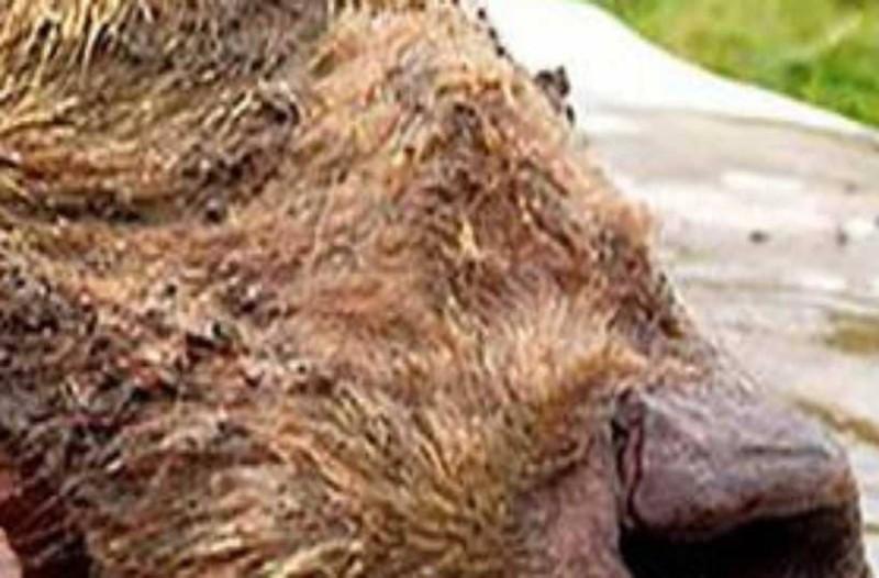 Σιβηρία: Βρήκαν κεφάλι λύκου 40.000 ετών!