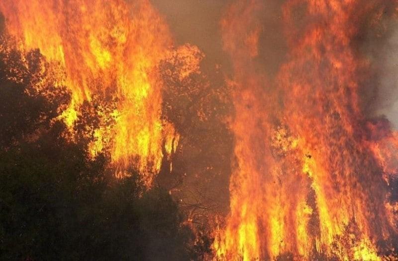Αχαΐα: Συνελήφθη 23χρονος για τη χθεσινή πυρκαγιά στο δάσος!