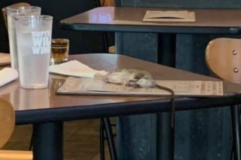 Ανατριχιαστικό:  Αρουραίος προσγειώθηκε στο τραπέζι πελάτισσας!