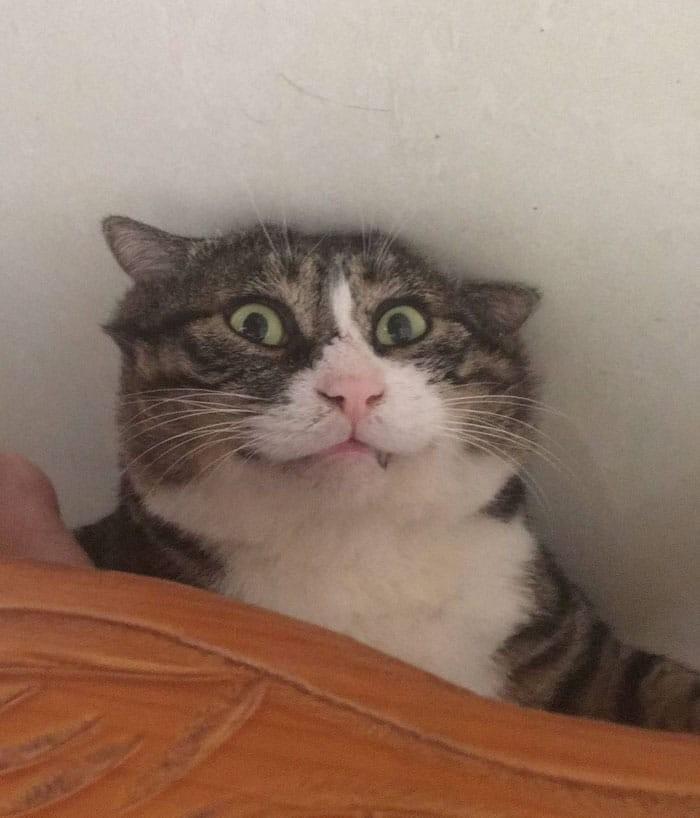 Αυτή η drama queen γάτα έχει γίνει viral για τις περίεργες αντιδράσεις της!