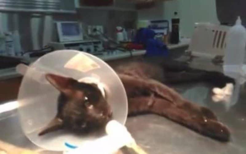 Φρίκη: Άφησε γάτα να χαροπαλεύει για 9 ώρες κάτω από τη ρόδα του αυτοκινήτου!