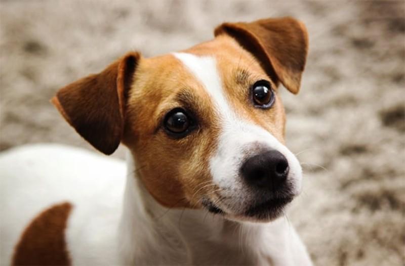 Καστοριά: Σκυλάκι έσωσε τα αφεντικά του από φίδι!