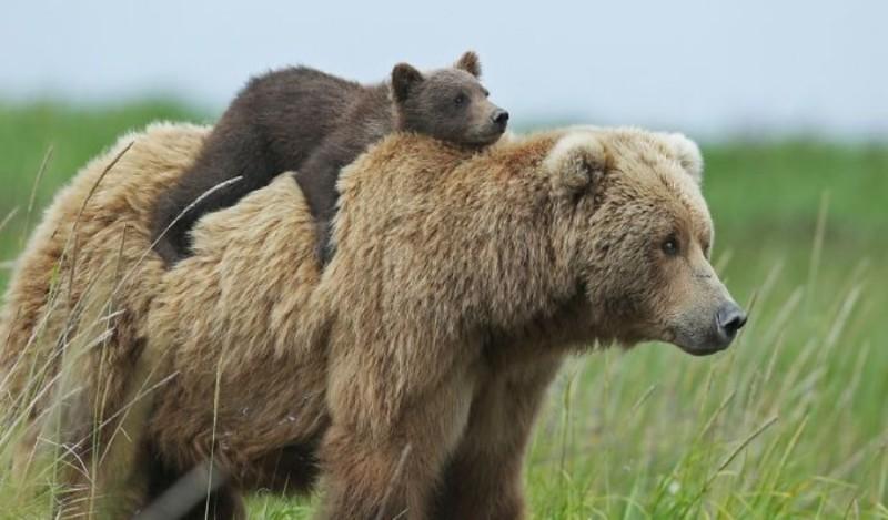 Έπαιξε μπουνιές με αρκούδα για να σωθεί! (Photo)