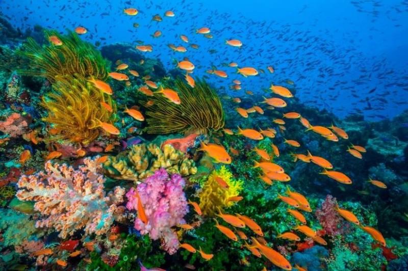Παγκόσμια ημέρα ωκεανών: Οι ωκεανοί είναι οι πνεύμονες του πλανήτη!