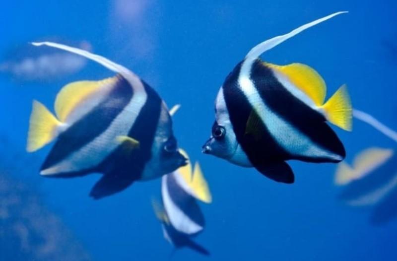 Έρευνα: Ο χωρισμός πονάει και τα ψάρια υποστηρίζουν oι ερευνητές!