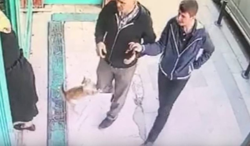 Αδέσποτη γάτα επιτίθεται μόνο σε άνδρες! (Video)