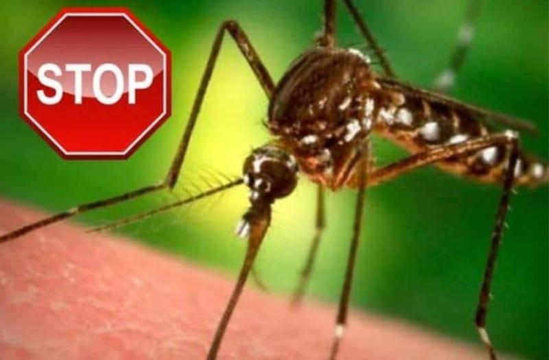 Κουνούπια τέλος: Αυτό είναι το μυστικό για να απαλλαγείτε μια για πάντα!