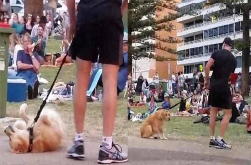 Επικό: Αν δείτε γιατί αυτός ο σκύλος παριστάνει τον νεκρό θα κλάψετε!