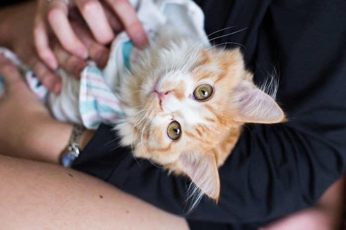 Γέννα γάτα