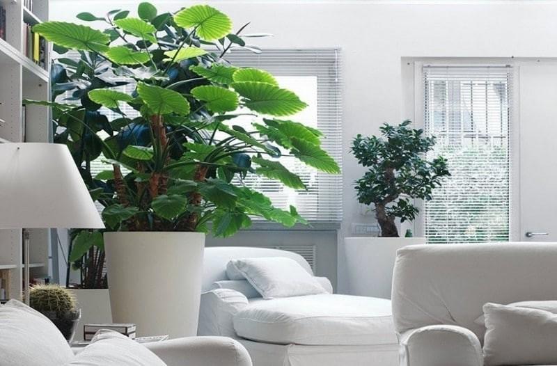 Εσύ το ήξερες; - Αυτό είναι το ιδανικό φυτό για το υπνοδωμάτιο σου!