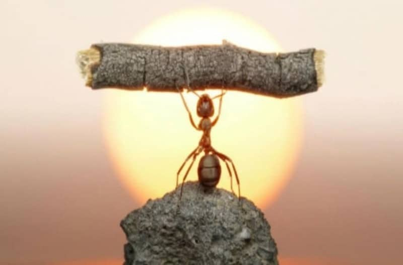 Κάθε μέρα ένα μικρό μυρμήγκι πήγαινε στη δουλειά: Το ανέκδοτο της ημέρας (19/07)!