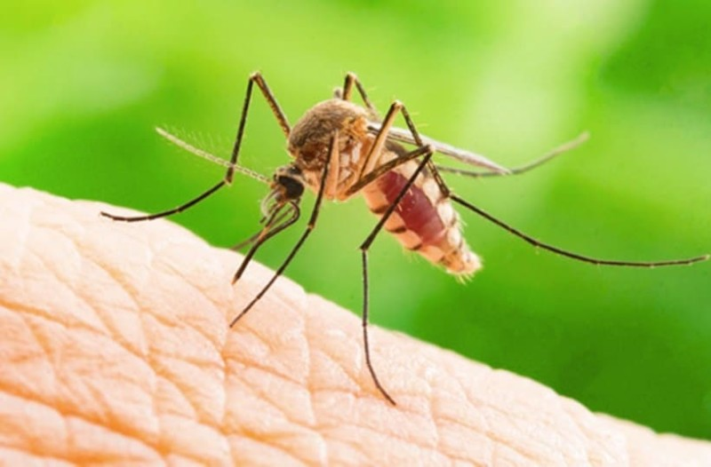 Έτσι θα διώξετε μακριά τα κουνούπια με πράγματα που έχετε στο σπίτι σας! (photos)